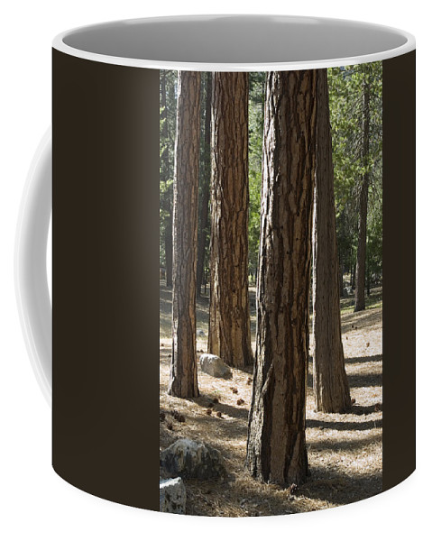 Trees Coffee Mug featuring the photograph Vertical Of A Stand Of Ponderosa Pine by Rich Reid