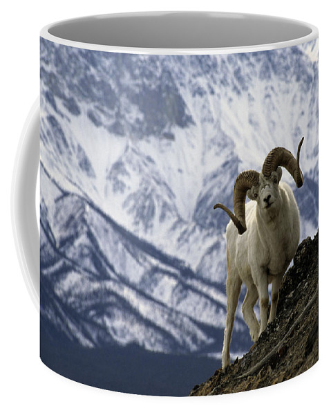 Nobody Coffee Mug featuring the photograph Very Large Dall Sheep Ram On The Grassy by Michael S. Quinton