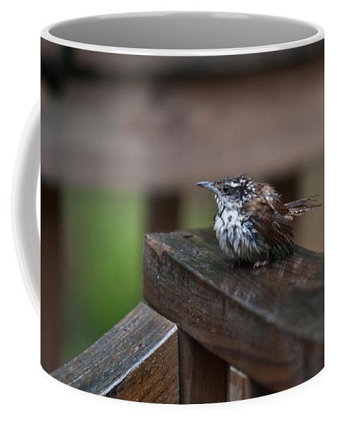 Cumberand Coffee Mug featuring the photograph Very Wet Wren by Douglas Barnett