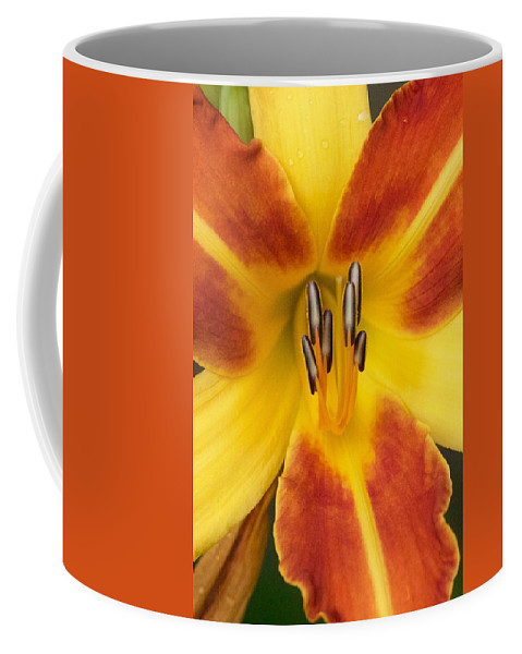 Flower Coffee Mug featuring the photograph Vibrant Lilly by Tiffany Erdman