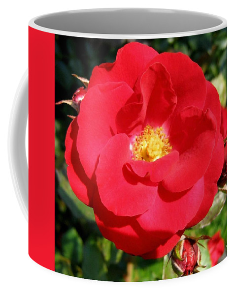 Rose Coffee Mug featuring the photograph Vibrant Red Rose by Will Borden