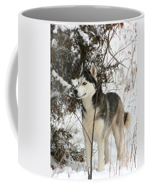 Animal Coffee Mug featuring the photograph Vigilant by David Dunham