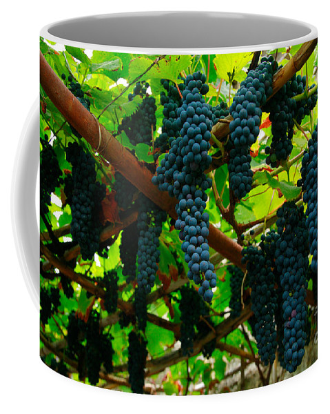 Countryside Coffee Mug featuring the photograph Vines by Gaspar Avila