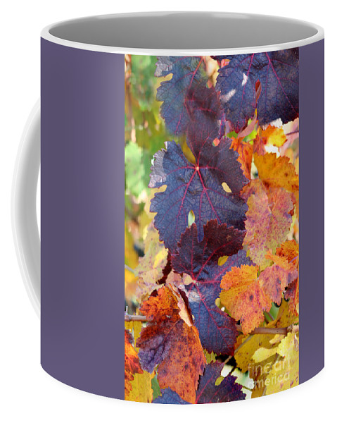 Grapevines Coffee Mug featuring the photograph Vineyard In Autumn by Melanie Rainey
