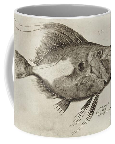 Fish Coffee Mug featuring the drawing Vintage Fish Print by Antonio Lafreri