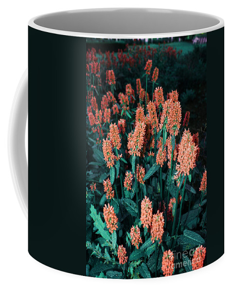 Coffee Mug featuring the photograph Violet Dream On by Jamie Lynn