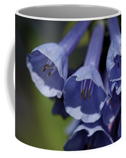 Background Coffee Mug featuring the photograph Virginia Bluebells by Jack R Perry