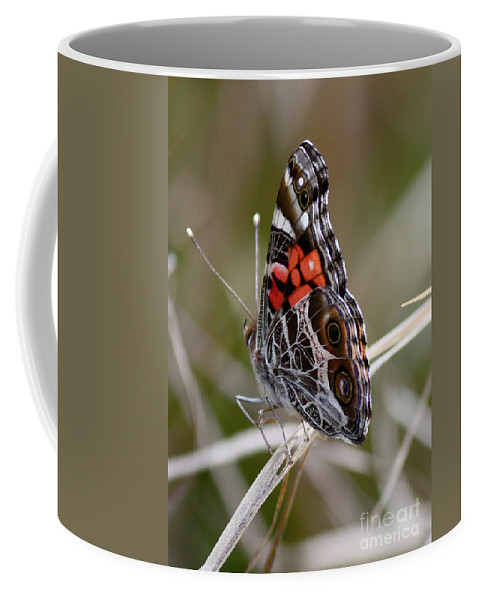 Butterfly Coffee Mug featuring the photograph Virginia Lady Butterfly Side View by Carol Groenen