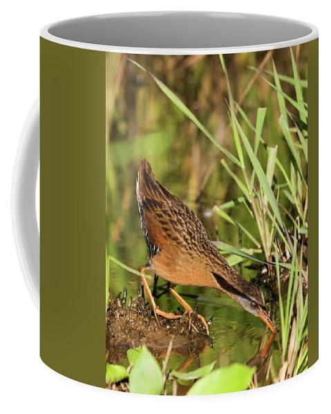 Virginia Rail Coffee Mug featuring the photograph Virginia Rail by Randall Ingalls