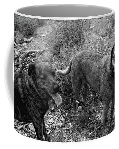 Dogs Coffee Mug featuring the photograph Wagging Tongues by Donna Blackhall