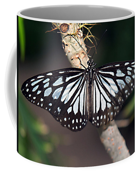Rice Paper Butterfly Coffee Mug featuring the photograph Waiting --- Rice Paper Butterfly by Bob Johnson