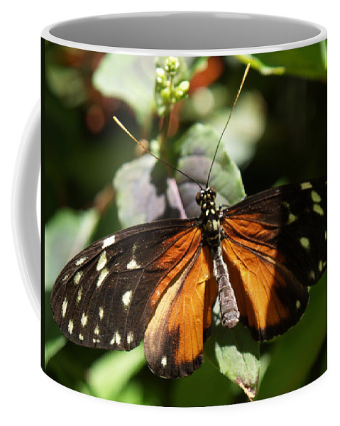 Butterfly Coffee Mug featuring the photograph Waiting by Bob Johnson