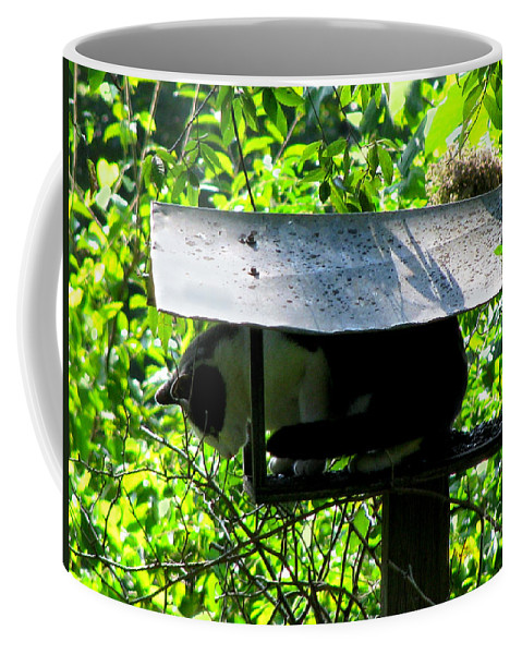 Cat Coffee Mug featuring the photograph Waiting For Dinner by Donna Brown