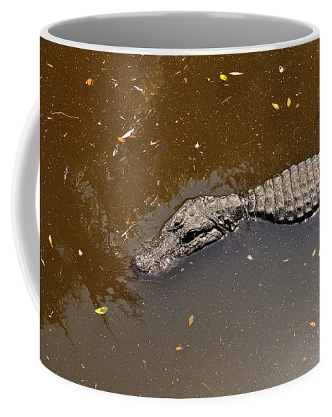 Alligator Coffee Mug featuring the photograph Waiting For Lunch by Kenneth Albin