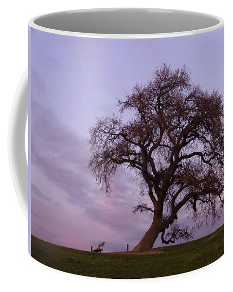 Livermore Coffee Mug featuring the photograph Waiting For Paul by Karen W Meyer