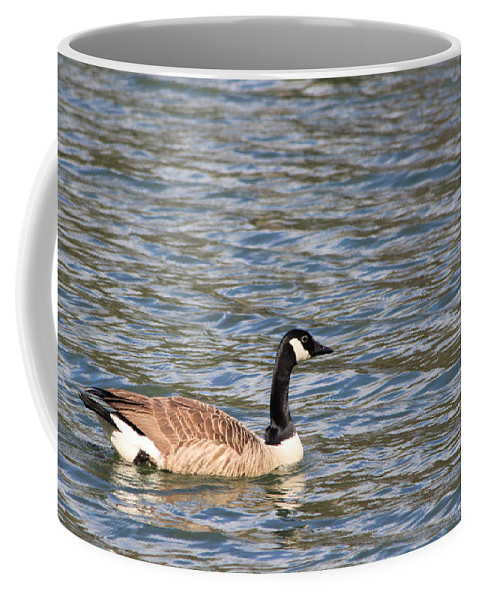 Water Winter Canadian Goose Bird Coffee Mug featuring the photograph Waiting For Spring by Suzanne Thurman