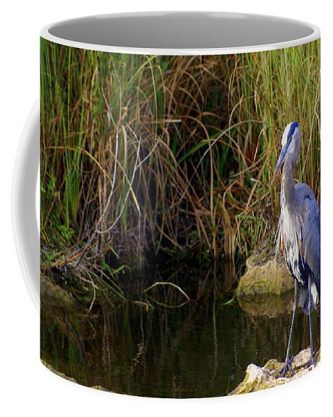 Bird Coffee Mug featuring the photograph Waiting by Marty Koch