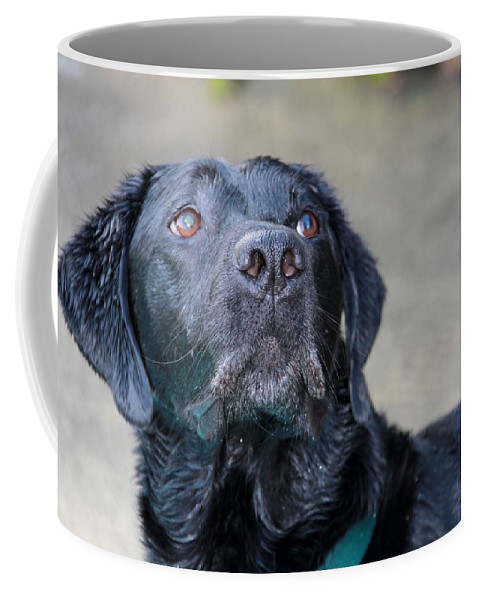 Photograph Coffee Mug featuring the photograph Waiting On Your Command by Sheila Wedegis