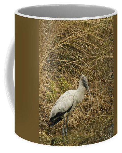 Bird Coffee Mug featuring the photograph Waiting by Phill Doherty