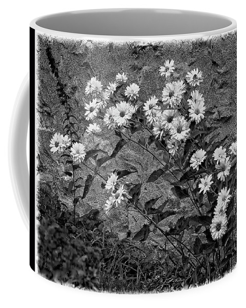 Flower Coffee Mug featuring the photograph Wallflower Ain't So Bad Bw by Steve Harrington