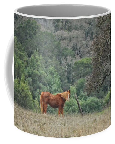 Horse Coffee Mug featuring the photograph Wanna Ride Little Lady by Donna Blackhall