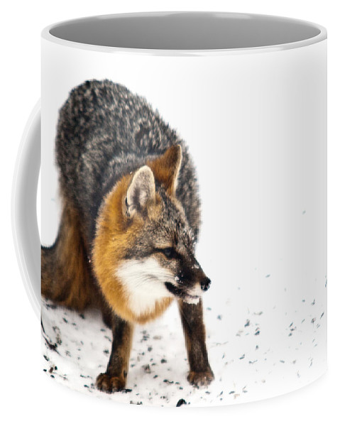Red Coffee Mug featuring the photograph Wary Red Fox by Douglas Barnett
