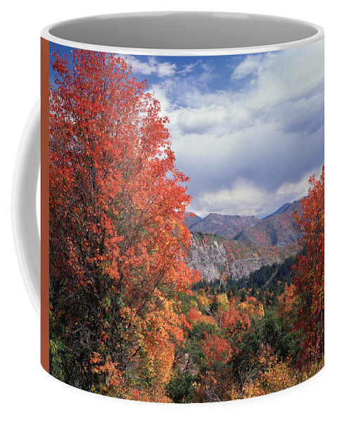 Canyon Maple Trees Coffee Mug featuring the photograph 212m45-wasatch Mountains In Autumn by Ed Cooper Photography