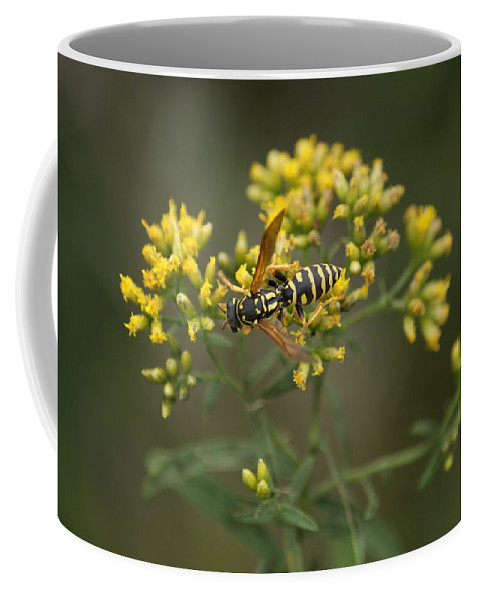 Insect Coffee Mug featuring the photograph Wasp by Heidi Poulin