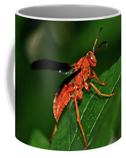 Insect Coffee Mug featuring the photograph Wasp On A Leaf 001 by George Bostian