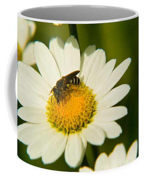 Wasp Coffee Mug featuring the photograph Wasp On Daisy by Douglas Barnett