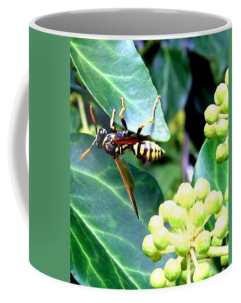 Wasp Coffee Mug featuring the photograph Wasp On The Ivy by Will Borden
