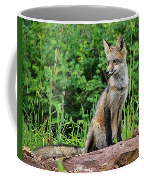 Fox Coffee Mug featuring the photograph Watchful by LeAnne Perry