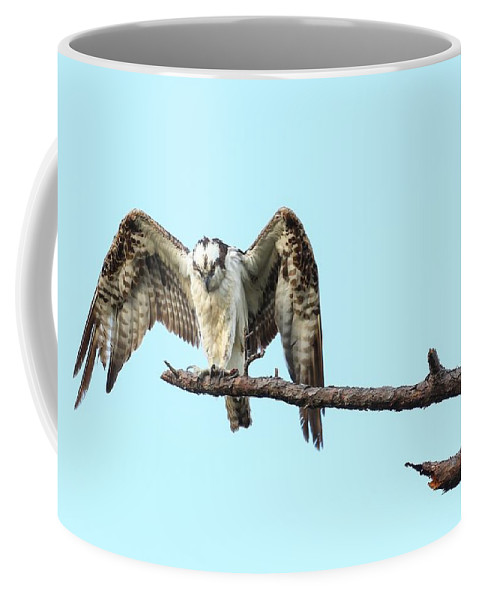 Bird Coffee Mug featuring the photograph Watching by Gary Oliver