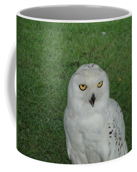 Owl Coffee Mug featuring the photograph Watching Owl by Susan Baker