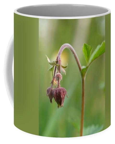 Lehtokukka Coffee Mug featuring the photograph Water Avens by Jouko Lehto