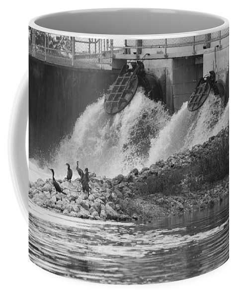 Water Coffee Mug featuring the photograph Water Birds by Rob Hans