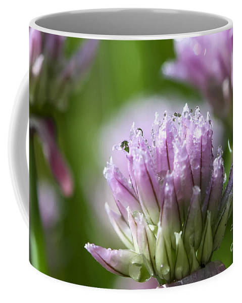Allium Coffee Mug featuring the photograph Water Droplets On Chives Flowers by Teresa Zieba