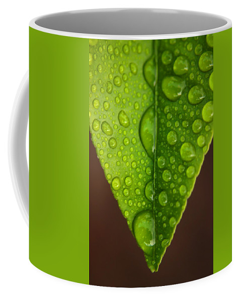 Leaf Coffee Mug featuring the photograph Water Droplets On Lemon Leaf by Ralph A Ledergerber-Photography