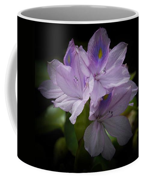 Water Hyacinth Coffee Mug featuring the photograph Water Hyacinth by Ernie Echols