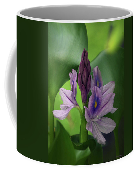 Water Hyacinth Coffee Mug featuring the photograph Water Hyacinth by Jenny Gandert