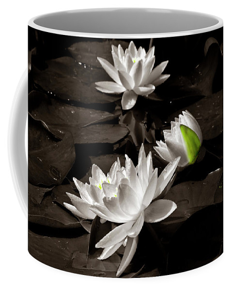 Water-lilies Coffee Mug featuring the photograph Water Lilies by Wolfgang Stocker