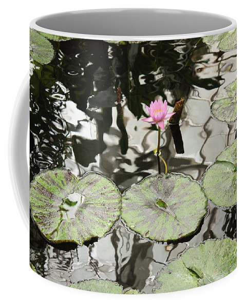 Water Lily Coffee Mug featuring the photograph Water Lily Canvas by Carol Groenen