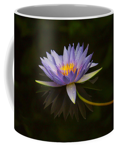 Blue Coffee Mug featuring the photograph Water Lily Close Up by Garry Gay