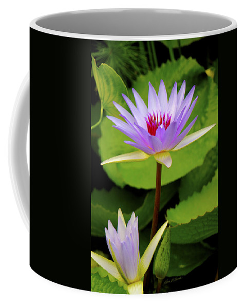 Water Lily In A Tropical Garden Coffee Mug featuring the photograph Water Lily In A Tropical Garden_4657 by Olivia Novak