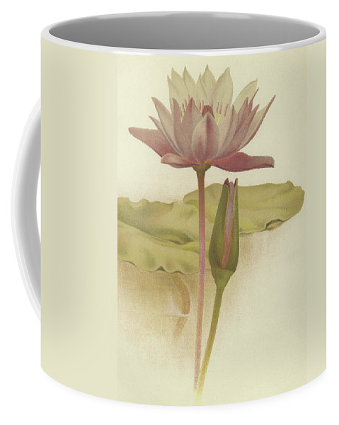 Water Lily Coffee Mug featuring the drawing Water Lily Nymphaea Zanzibarensis by English School