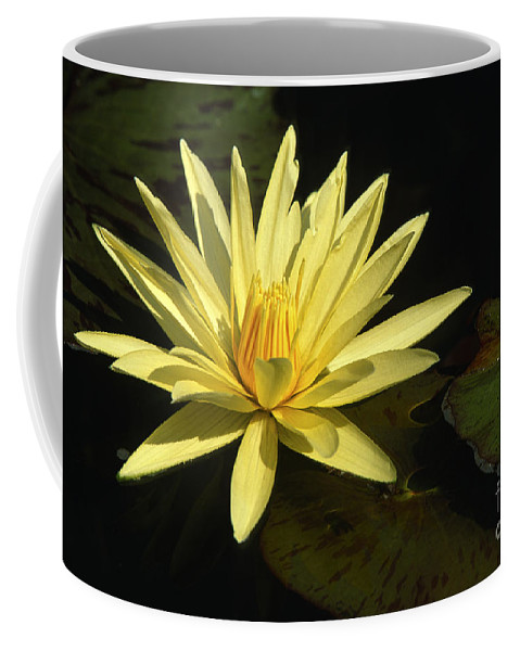 Flowers Coffee Mug featuring the photograph Water Lily by Sandra Bronstein