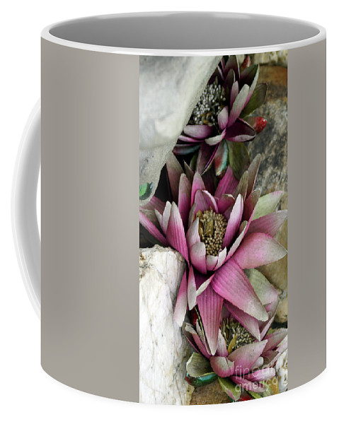 Seerose Coffee Mug featuring the photograph Water Lily - Seerose by Eva-Maria Di Bella