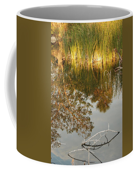 Wood Coffee Mug featuring the photograph Water Line by Rob Hans