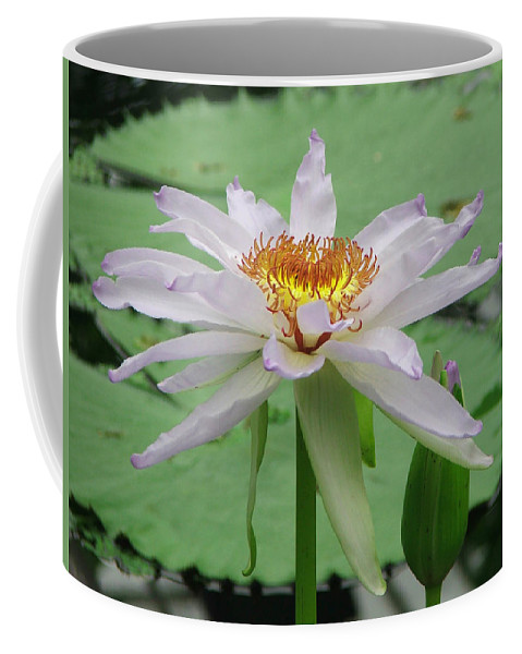 Waterlily Coffee Mug featuring the photograph Waterlily by Heather Lennox