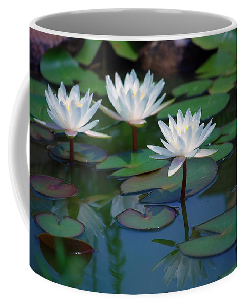 Waterlily Coffee Mug featuring the photograph Waterlilys by Robert Meanor